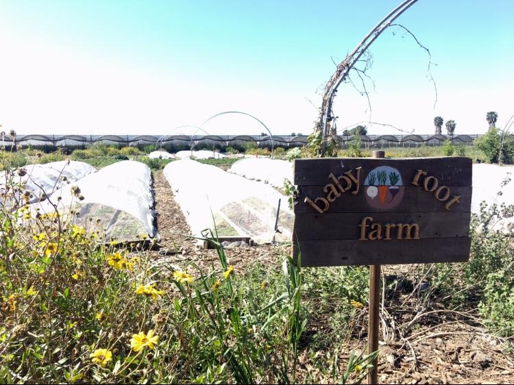 Agriculture_Farm_Tour_17