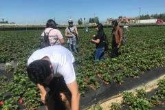 Agriculture_Farm_Tour_5